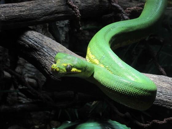 snake at London sea life
